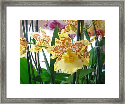 Yellow Brown Orchid Flowers Art Prints Framed Print