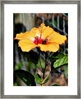 Yellow Bumble Bee Flower Framed Print