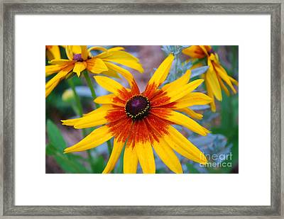 Framed Print featuring the photograph Yellow Burst by Allen Beatty