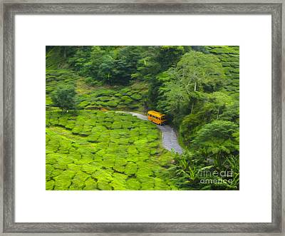 Yellow Bus Framed Print by Patricia Hofmeester