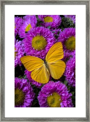 Yellow Butterfly And Pink Flowers Framed Print by Garry Gay