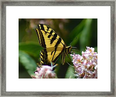 Yellow Butterfly Framed Print by Camille Lopez