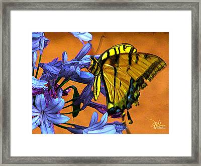 Yellow Butterfly On Agapanthus Framed Print