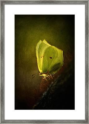 Yellow Butterfly Sitting On The Moss  Framed Print by Jaroslaw Blaminsky