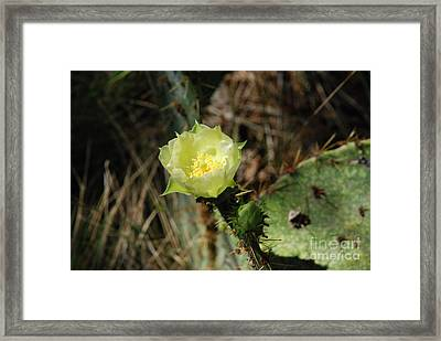 Yellow Cactus Bloom Framed Print by M E Wood