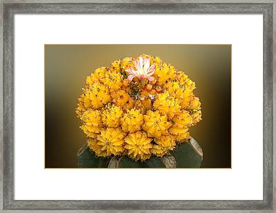 Framed Print featuring the photograph Yellow Cactus by Geraldine Alexander