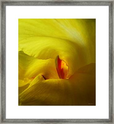 Yellow Canna Cavern Framed Print