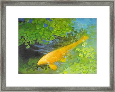 Yellow Carp In Green Framed Print by Robert Conway