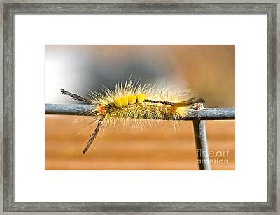 Yellow Caterpillar Framed Print