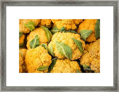 Yellow Cauliflower Framed Print by Rebecca Cozart
