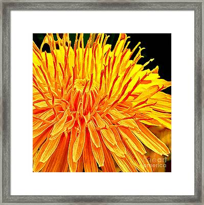 Yellow Chrysanthemum Painting Framed Print by Bob and Nadine Johnston