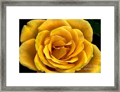 Yellow Close-up Framed Print by Robert Bales