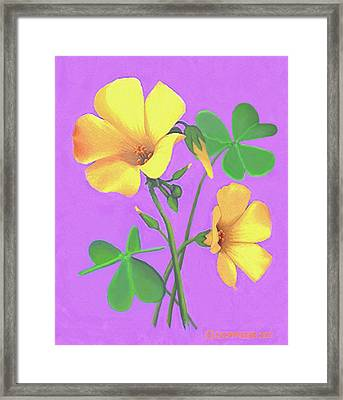 Yellow Clover Flowers Framed Print by Sophia Schmierer