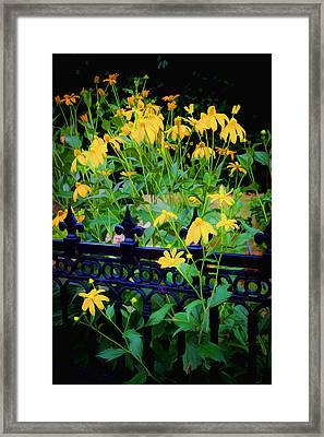 Yellow Coneflowers Echinacea Wrought Iron Gate Framed Print by Rich Franco