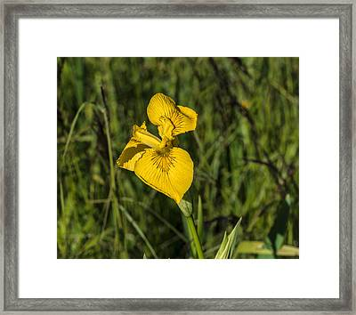 Framed Print featuring the photograph Yellow Crown by Leif Sohlman
