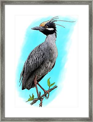 Yellow Crowned Heron Framed Print by Roger Hall