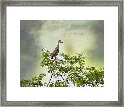 Yellow-crowned Night Heron Swaying In The Wind Framed Print by J Larry Walker