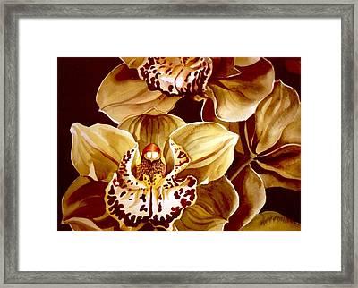 Yellow Cymbidium Orchid Framed Print