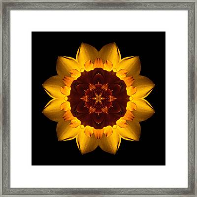 Yellow Daffodil I Flower Mandala Framed Print