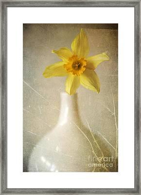 Yellow Daffodil In The White Flower Pot Framed Print by Jaroslaw Blaminsky