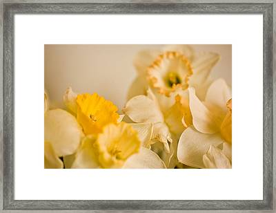 Yellow Daffodils Framed Print by John Holloway