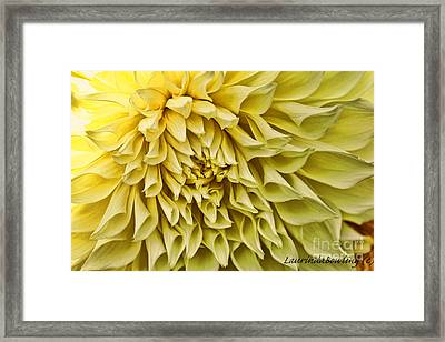 Yellow Dahlia Framed Print by Laurinda Bowling