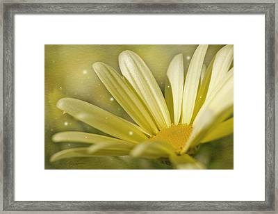 Yellow Daisy Framed Print by Ann Lauwers