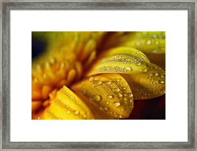 Yellow Daisy Drizzle Framed Print