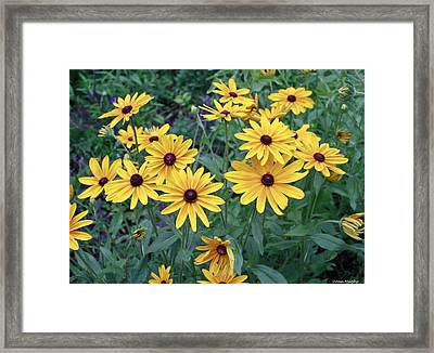 Yellow Daisy Flowers #3 Framed Print