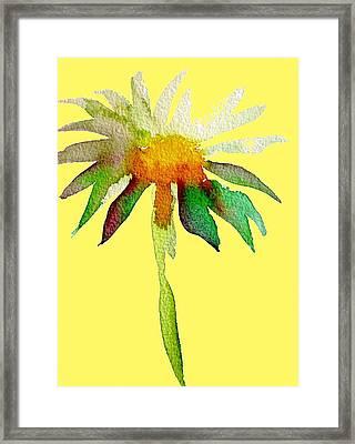 Yellow Daisy Framed Print by Sacha Grossel