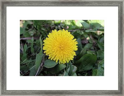 Yellow Dandelion Framed Print by Khoa Luu