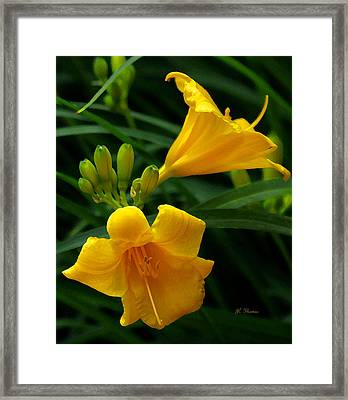Framed Print featuring the photograph Yellow Daylilies by James C Thomas