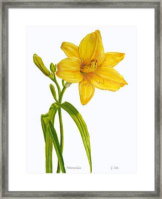 Yellow Daylily - Hemerocallis Framed Print by Janet  Zeh