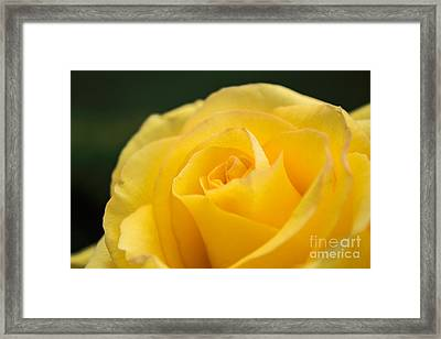 Yellow Delight Framed Print by Arlene Carmel