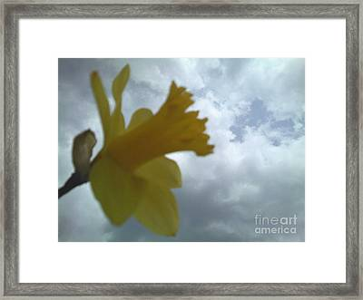 Yellow Delight Framed Print by Thommy McCorkle