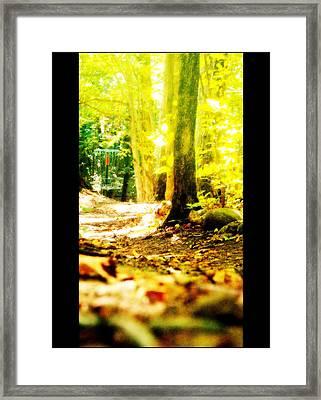Yellow Discin Day Framed Print