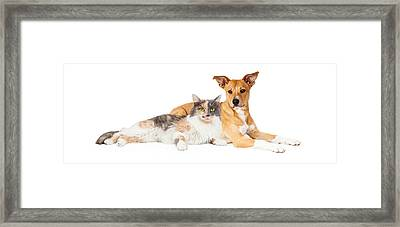 Yellow Dog And Calico Cat Framed Print