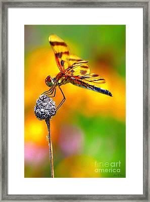 Yellow Dragon Framed Print by Adam Olsen