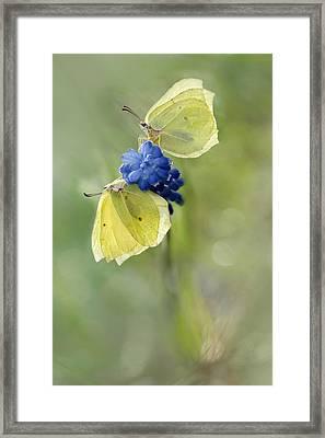 Yellow Duet Framed Print