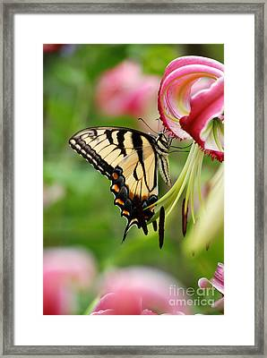 Framed Print featuring the photograph Yellow Eastern Swallowtail Butterfly by Eva Kaufman
