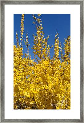 Yellow Explosion Framed Print