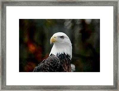 Framed Print featuring the photograph Yellow Eye by Steve Godleski