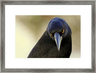 Framed Print featuring the photograph Yellow Eyes by Miroslava Jurcik