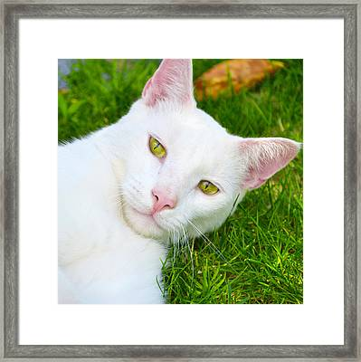 Yellow Eyes Framed Print by Tine Nordbred