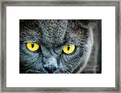 Yellow Eyes Framed Print