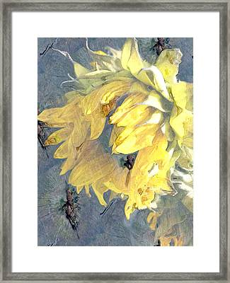 Yellow Fading Flower Framed Print by Patricia Januszkiewicz