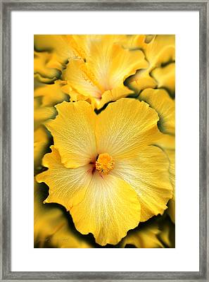 Yellow Fantasy Hibiscus Flowers Framed Print by Jennie Marie Schell