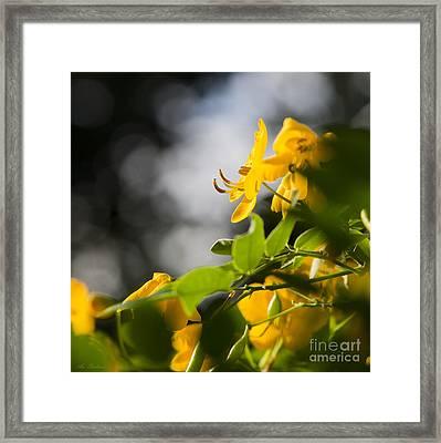 yellow Fever 03 Framed Print by Arik Baltinester