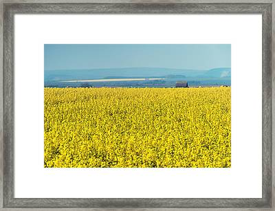 Yellow Field Framed Print by Svetlana Sewell