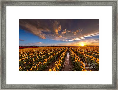 Yellow Fields And Sunset Skies Framed Print by Mike Reid